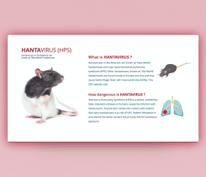 Hantavirus PowerPoint Template – Definition & Risks